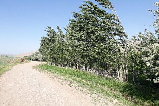 پیشبینی وزش باد شدید در زنجان