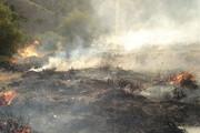 ببینید | نجات جوجه تیهوها از آتش کوه در استان بوشهر