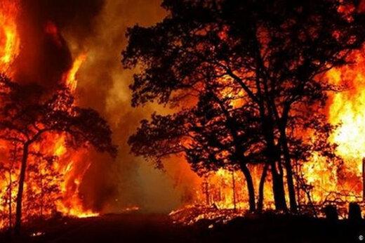 ببینید | آتش در جنگل خسرج همچنان زبانه می کشد!