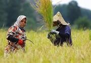 گسترش حضور زنان روستایی قم در فعالیتهای کشاورزی