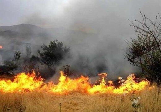 کنترل آتشسوزی جنگلهای «نیر»؛ خطر همچنان وجود دارد