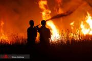 ببینید | بوستان ولایت تهران در آتش سوخت