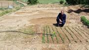 شهرستان شهرکرد مجری طرح احداث باغچههای سلامت