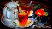 ایران در میان ۶ منطقه اصلی برداشت چای در آسیا! +تصاویر