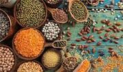 حبوبات جایگزین کشت برنج در خراسان شمالی می شود