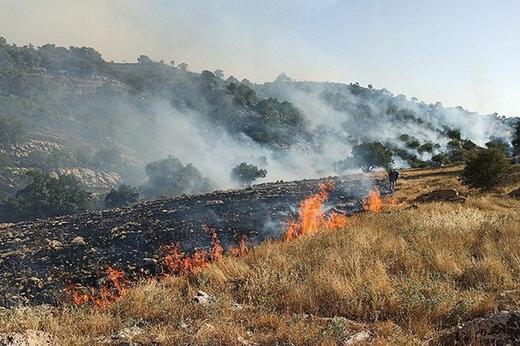 ببینید | شعلهور شدن دوباره آتش در منطقه حفاظت شده خائیز