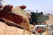 خرید بیش از ۱۵ هزار تن گندم از کشاورزان لرستانی