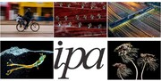 برندگان مسابقه عکاسی IPA معرفی شدند