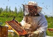 تولید عسل در شهرستان فارسان ۳۵درصد افزایش یافت