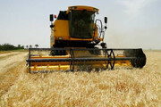آغاز برداشت جو از مزارع کشاورزی قزوین