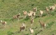 برخورد قضایی با شکارچیان غیرمجاز در مناطق حفاظت شده