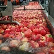 صدور ۱۰ موافقت اصولی طرحهای کشاورزی در خوزستان