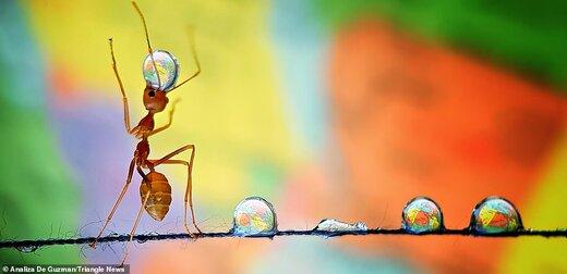 تصاویر دیدنی از دنیای مورچهها