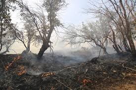 آتش به جان اراضی بوشهر افتاد /۱۱۰۰ هکتار از مراتع کوهستانی بوشکان در آتش سوخت