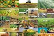 طرح جامع کاشت گیاهان علوفهای در قم اجرا میشود