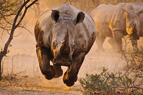 خارق العاده ترین تصاویر از حیوانات که تا به حال ندیده اید!