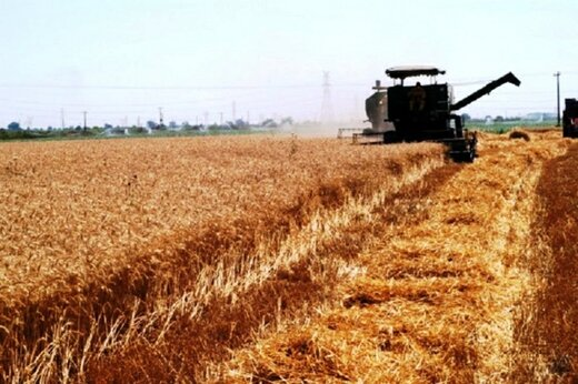 پیش  بینی برداشت ۲۰ هزار تن محصول جو از مزارع خرمآباد