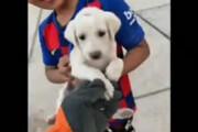 ببینید | نجات یک توله سگ توسط آتش نشانان در زاهدان
