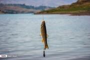 ببینید | شیوه عجیب ماهیگیری با مار!