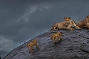 ببینید | ثبت لحظات زیبا از دنیای حیوانات