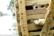 ببینید | نجات 700 گربه از سلاخی برای رستورانهای چینی!