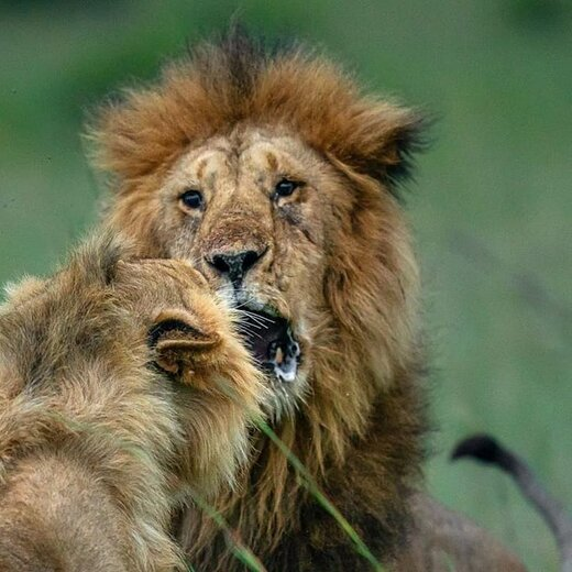 ثبت تصاویر زیبایی از حیوانات