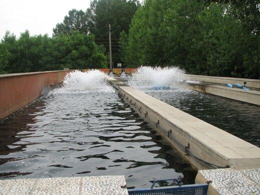 ۱۶۰۰تن انواع ماهی در استخرهای قزوین تولید میشود
