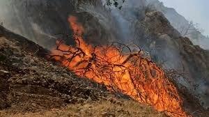 آتشسوزی در کمین مراتع و جنگلها / ۱۵۶ هکتار از مراتع و جنگلهای استان کرمان در آتشسوزی از دست رفت
