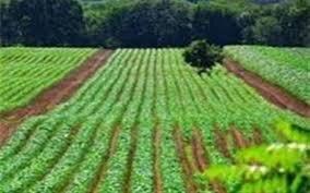 ۴۰۰ میلیارد تومان تسهیلات به کشاورزان صادرکننده استان کرمان پرداخت میشود