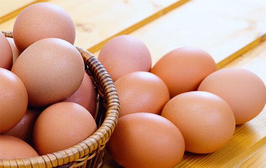 واکنش معاون امور دام وزارت جهاد کشاورزی به افزایش قیمت تخم مرغ