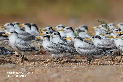 «بچههای هور»، فیلمی درباره قاچاق پرندگان