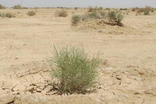 ۱۴ میلیون هکتار؛ وسعت اراضی بحرانی بیابانی در کشور