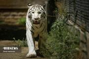 تصاویر | گشت آخر هفته در باغ وحش پارک ارم تهران