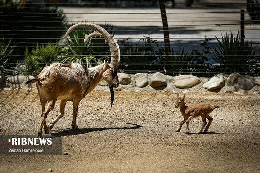 باغ وحش پارک ارم تهران