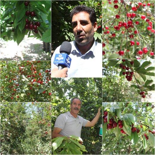 بروجرد مقام اول سطح زیر کشت باغات در استان لرستان