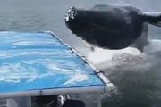 ببینید | صحنه ای فوق العاده حیرت انگیز از نهنگ غول پیکر