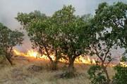ببینید | جدال داوطلبان و محیطبانان با آتش در کرمانشاه