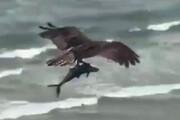 ببینید | تصویر فوق العاده از شکار ماهی توسط پرنده