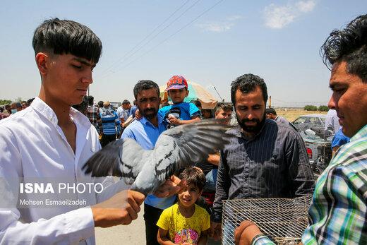 وضعیت قرمز در بازار پرندگان مشهد