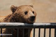 تصاویر | پرترههای تماشایی از شیر، خرس و دیگر حیوانات زیبا در باغوحش باراجین قزوین