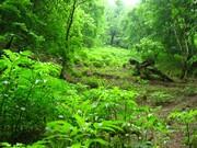 فرماندار ملایر: ۵۰۰ هکتار جنگل به وسعت فضای سبز شهرستان ملایر اضافه شد