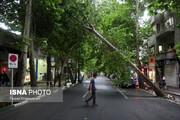 ببینید | برکناری آقای شهردار به دلیل قطع درختان خیابان فلسطین تهران