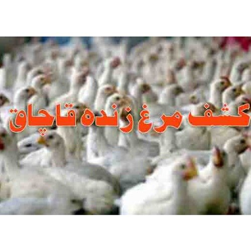 """کشف ۷ تن مرغ زنده قاچاق در """"فارسان"""""""