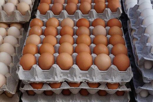 هر کیلو تخم مرغ درب مرغداری چند هزار تومان است؟