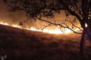 ببینید | روایت تصویری نگرانکننده از مرگ درختان بلوط در دمچنار