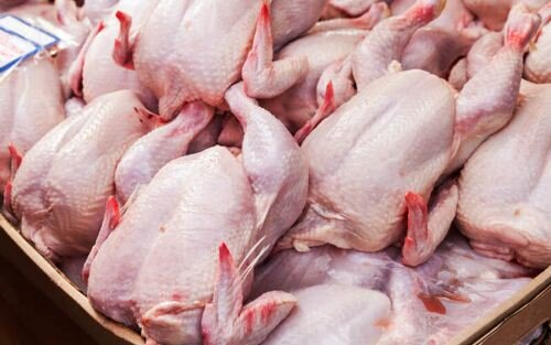 سالانه ۷۰هزار تن گوشت مرغ در قزوین تولید میشود