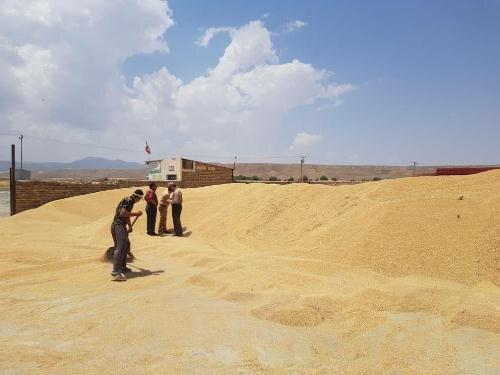 ورود و خروج در مراکز خرید گندم ثبت میشود