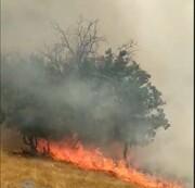 آخرین وضعیت آتش سوزی منطقه دمچنار شهرستان بویراحمد/ برآورد خسارات آتش سوزی