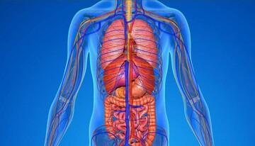 ۱۴روش برای پاکسازی و سم زدایی بدن/ به فیلتر طبیعی بدن خود کمک کنید