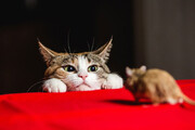ببینید | بوکس بازی دو موش برای ترساندن گربه